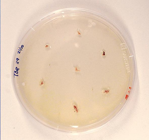 forest pathology phytophthora 11