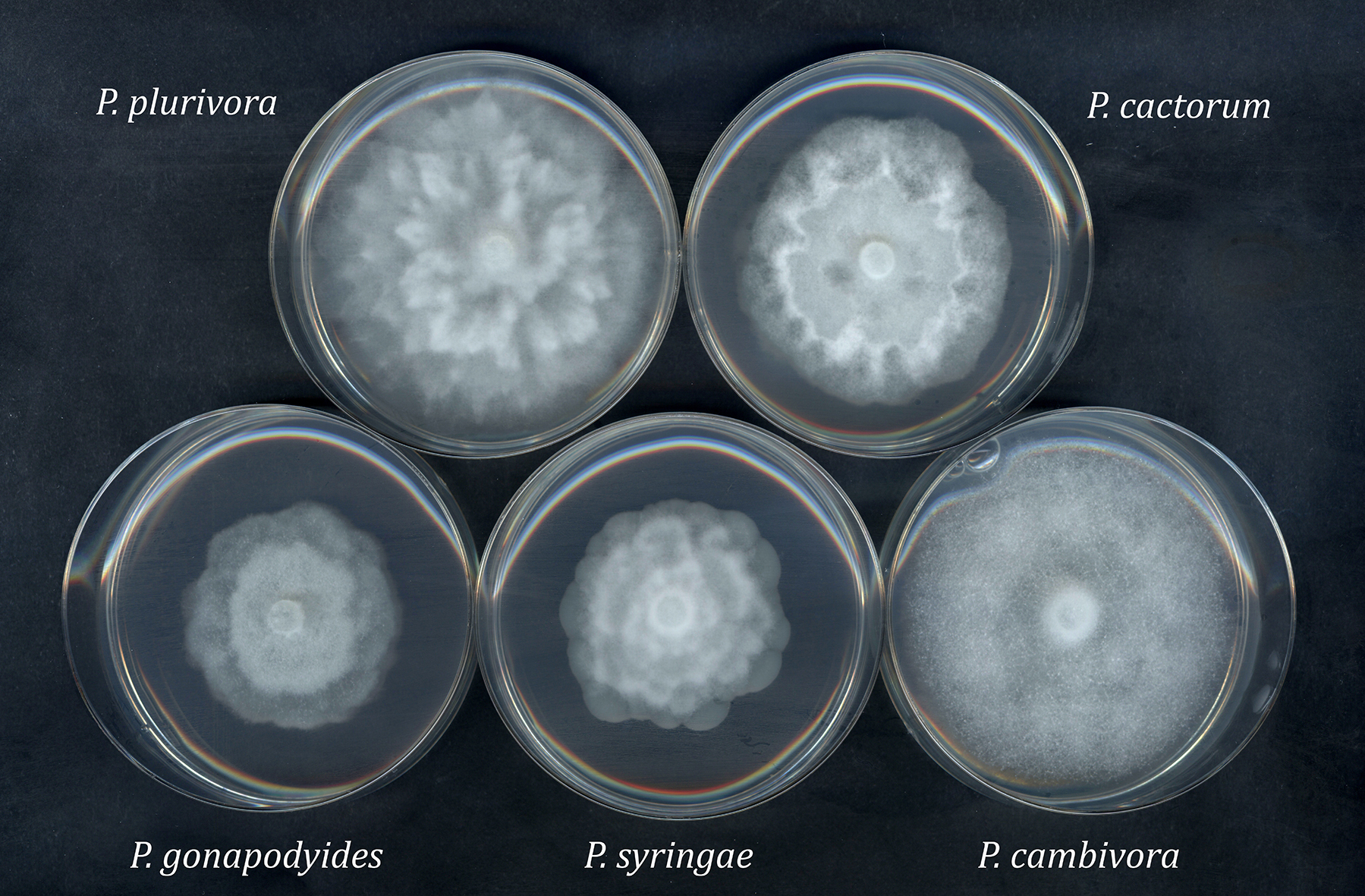 forest pathology phytophthora 8